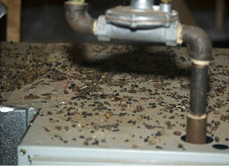 Rodent Removal Atlanta Mayday Wildlife Services Mayday