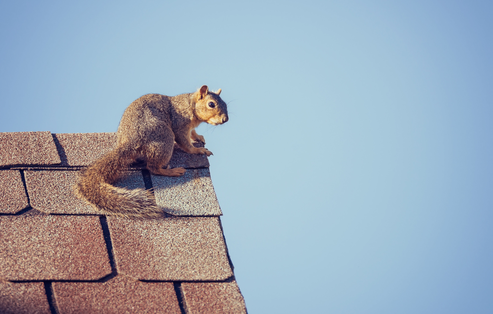 Why Squirrel Removal Should be Left to the Professionals | MayDay ...