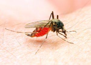 Mosquito in Atlanta