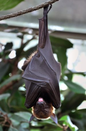 Bat in Atlanta